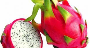 خرید و فروش میوه دراگون